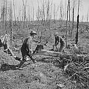 Farming the clearcut. Photo courtesy Yale University Press