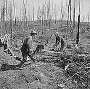 Farming the clearcut. Photo courtesy Yale University Press
