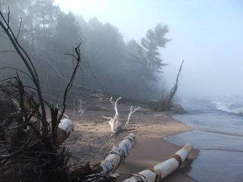 Trees in the Scientific and Natural Area at the south end of Park Point are dragged into the lake by a storm. Photo: John Ramos, Duluth Monitor https://bit.ly/3kQKms3