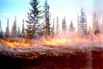 Controlled burn enriches the soil and nourishes plants favored by some animals. Photo: Ken Kistler