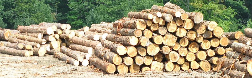 AgChoice PA Forest Financing Amp Timber Loans