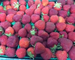 local_summer_berries_1