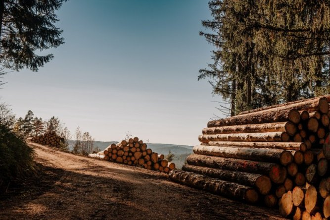 Photo: Lumber still in the woods.