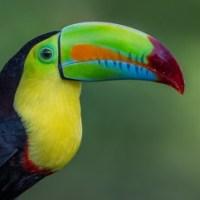 La evolución de los picos en las aves