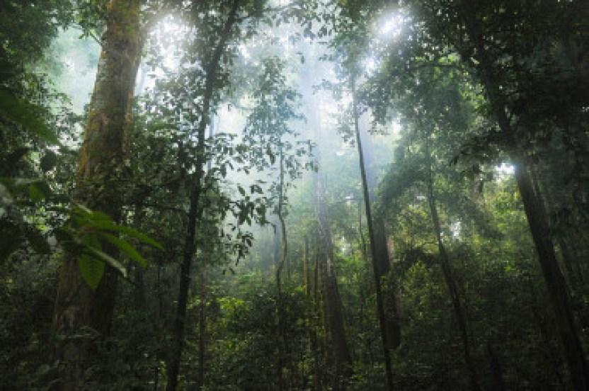 <p>Se ha descubierto que las regiones que más han aumentado su capacidad de secuestrar carbono de la atmósfera y que tienen, por tanto, un rol muy importante, son los bosques tropicales. / Pixabay</p>