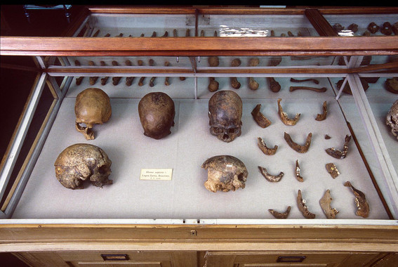 <p>Cráneos y otros restos humanos de Lagoa Santa, Brasil, guardados en el Museo de Historia Natural de Dinamarca /Natural History Museum of Denmark</p>
