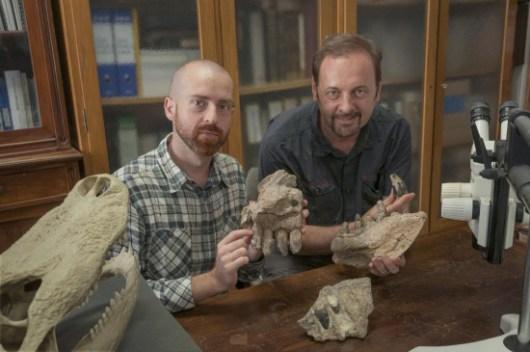 Los paleontólogos Cristiano Dal Sasso (derecha) y Simone Maganuco (izquierda) exhiben algunos huesos de cráneo de Razanandrongobe sakalavae en el Museo de Historia Natural de Milán / Giovanni Bindellini