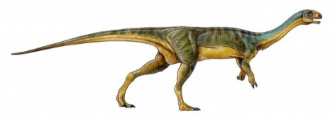 Chilesaurus diegosuarez. /Gabriel Lío