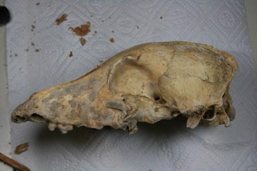 El-genoma-de-los-perros-europeos-persiste-desde-el-Neolitico_image_380