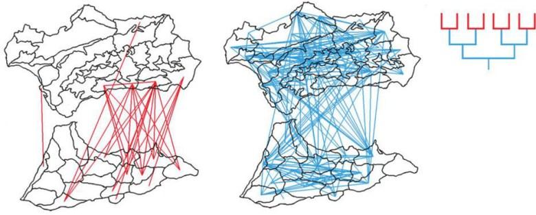 <p>Relaciones filogenéticas superficiales (rojo) y profundas (azul) entre comarcas de Andalucía y Norte de África. / US</p>