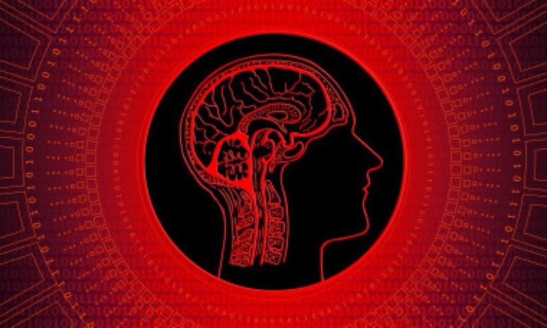<p>Un modelo computacional revela que los factores ecológicos, y no los sociales, están detrás del gran tamaño del cerebro humano. / Geralt</p>