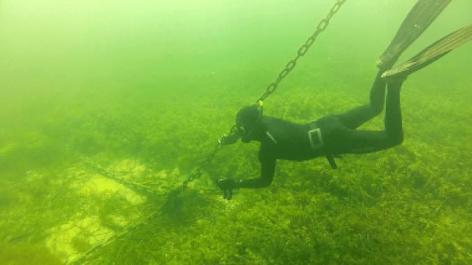 <p>Pérdida de vegetación en las praderas marinas de las bahías de Rottnest Island (Australia). / Edith Cowan University</p>