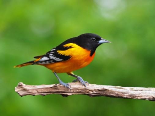 Los investigadores analizaron529 especiesyutilizaron datos deprogramas de monitorizaciónrecogidos a largo plazo en Estados Unidos y Canadá./ Gary Mueller