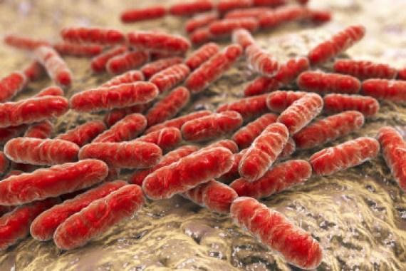 Bacterias para mejorar la salud mental