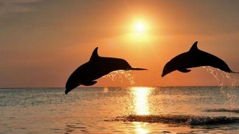 La poesia è come il canto dei delfini. Non tutte le orecchie possono percepirla. (Valeriu Butulescu)