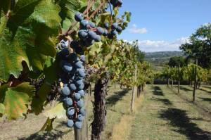 I vini dell'irpinia