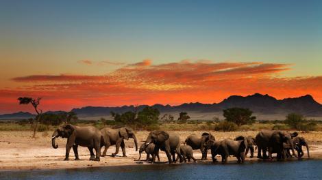 Un' oasi in Africa