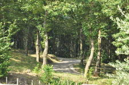 Il bosco dell'Agriturismo Ricciardelli