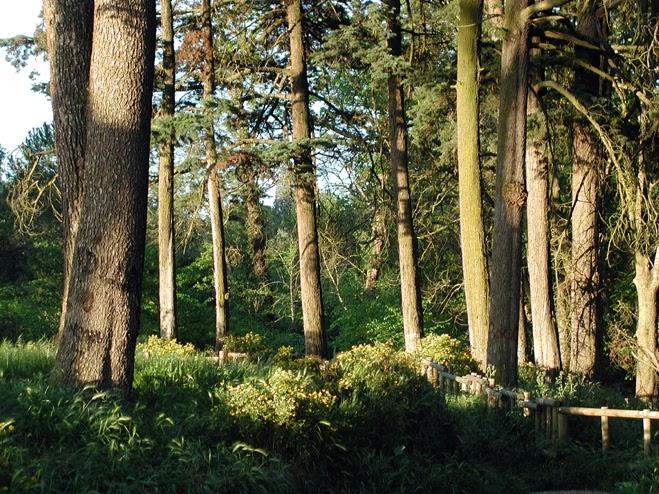 planeación forestal