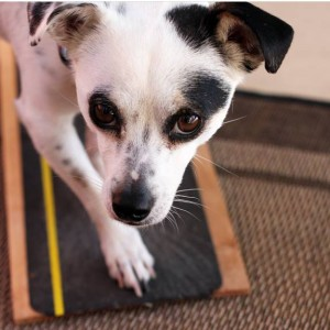 παιχνίδι-ξυσίματος-σκύλου