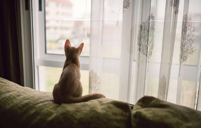 Gefahr Fenster Und Balkone Wenn Katzen Stürzen Oder