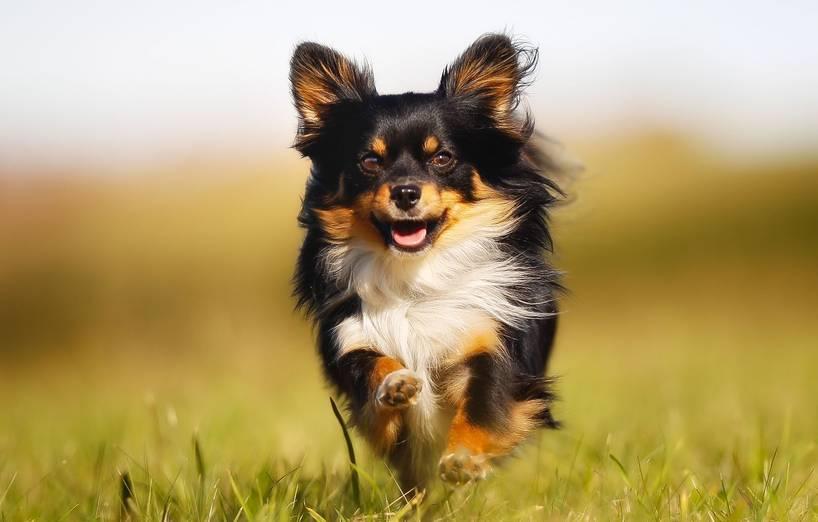 Kleine Hunde Groe Verantwortung AGILA