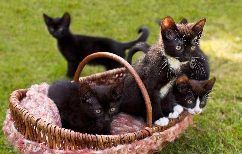 Wann Sollte Man Katzenbabys Abgeben Agila
