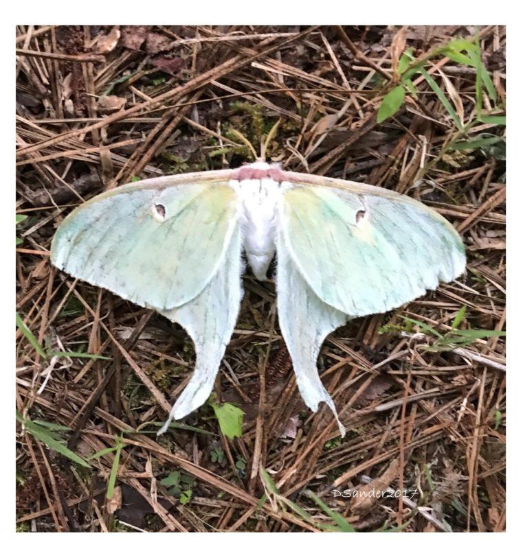Symbols Of Transformation A Total Eclipse A Luna Moth