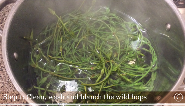 """Wild Hops on Barn Sauce"" - ""Luppolo selvatico in Toc' di Braide"""