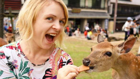 Feeding the deer in Nara
