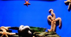 Starfish Like A Boss