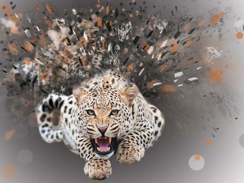 photomontage réalisé à partir d'une photo de léopard