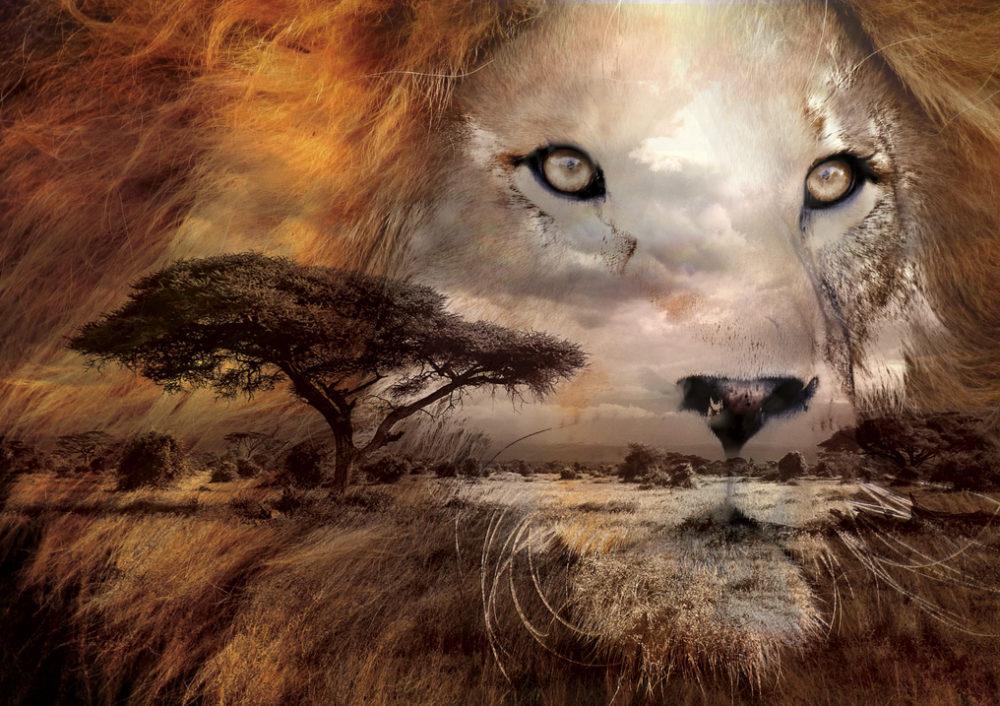 affiche double exposition lion et la savane