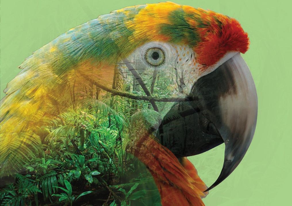 double exposition le perroquet et la jungle