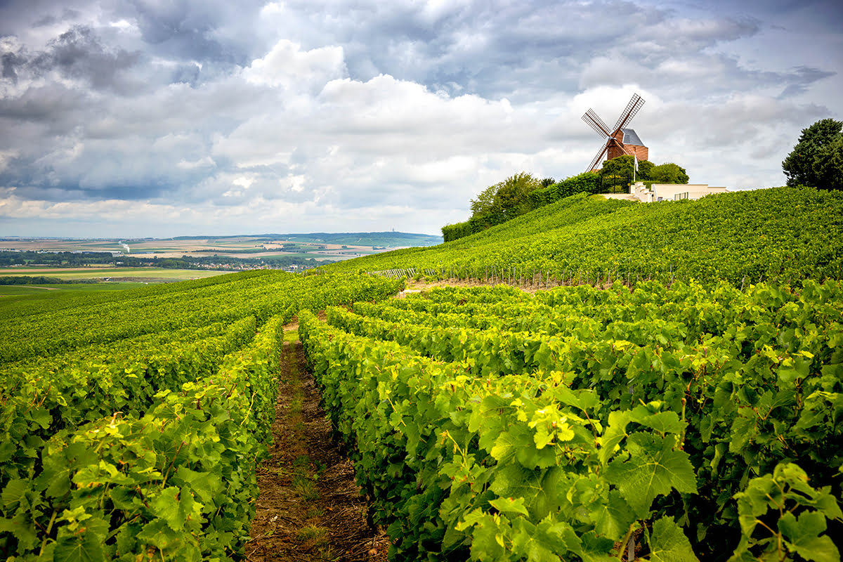 Day trips from Paris-France-travel-Champagne Wine Region