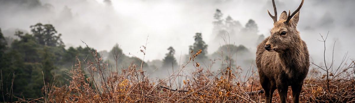 Featured photo-Mount Wakakusa
