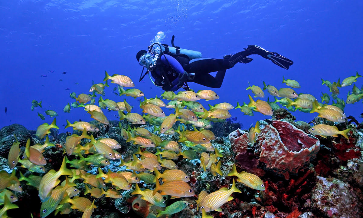 Cozumel-Coral Reefs Monument-diving-beach