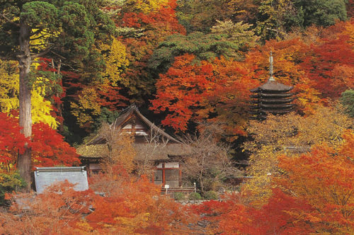 Autumn in Nara-Tanzan Shrine