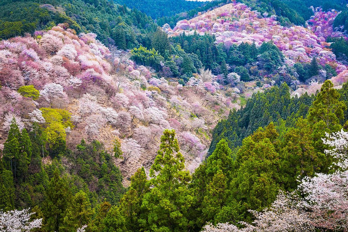 Nara onsen-Japanese bath-Yoshino Onsen-Mount Yoshino