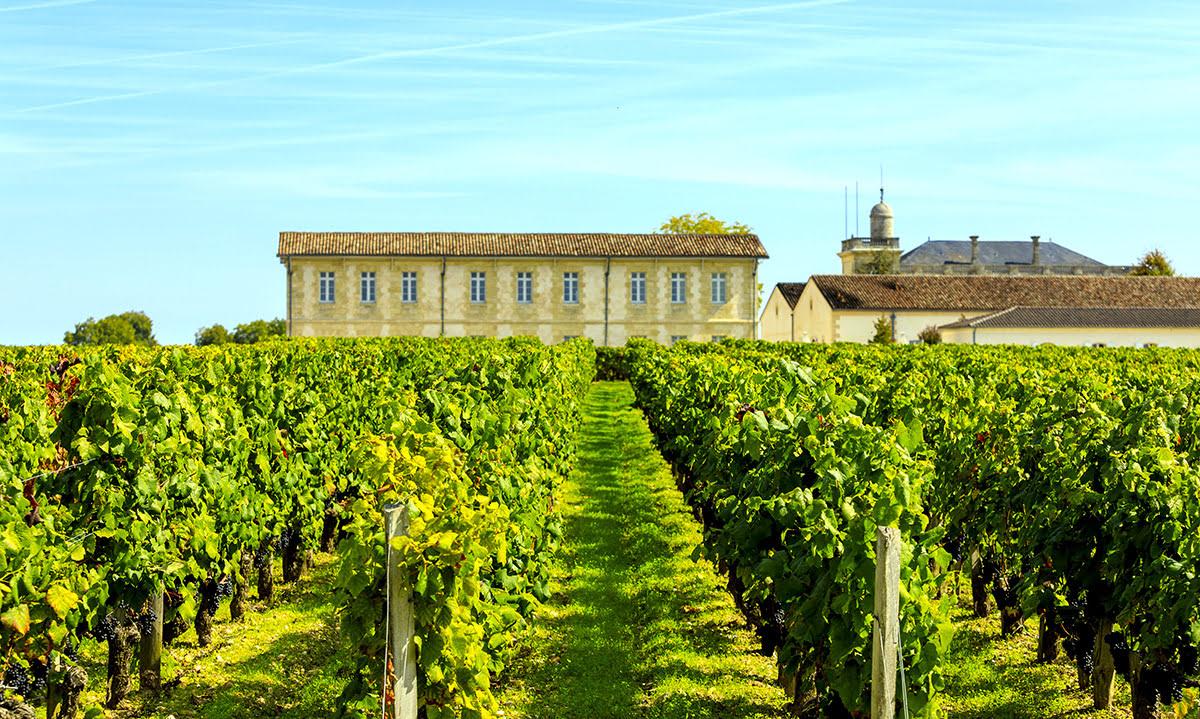 Wine tasting tours-vineyards-wineries-Bordeaux-Château Franc-Mayne-Château La Dominique