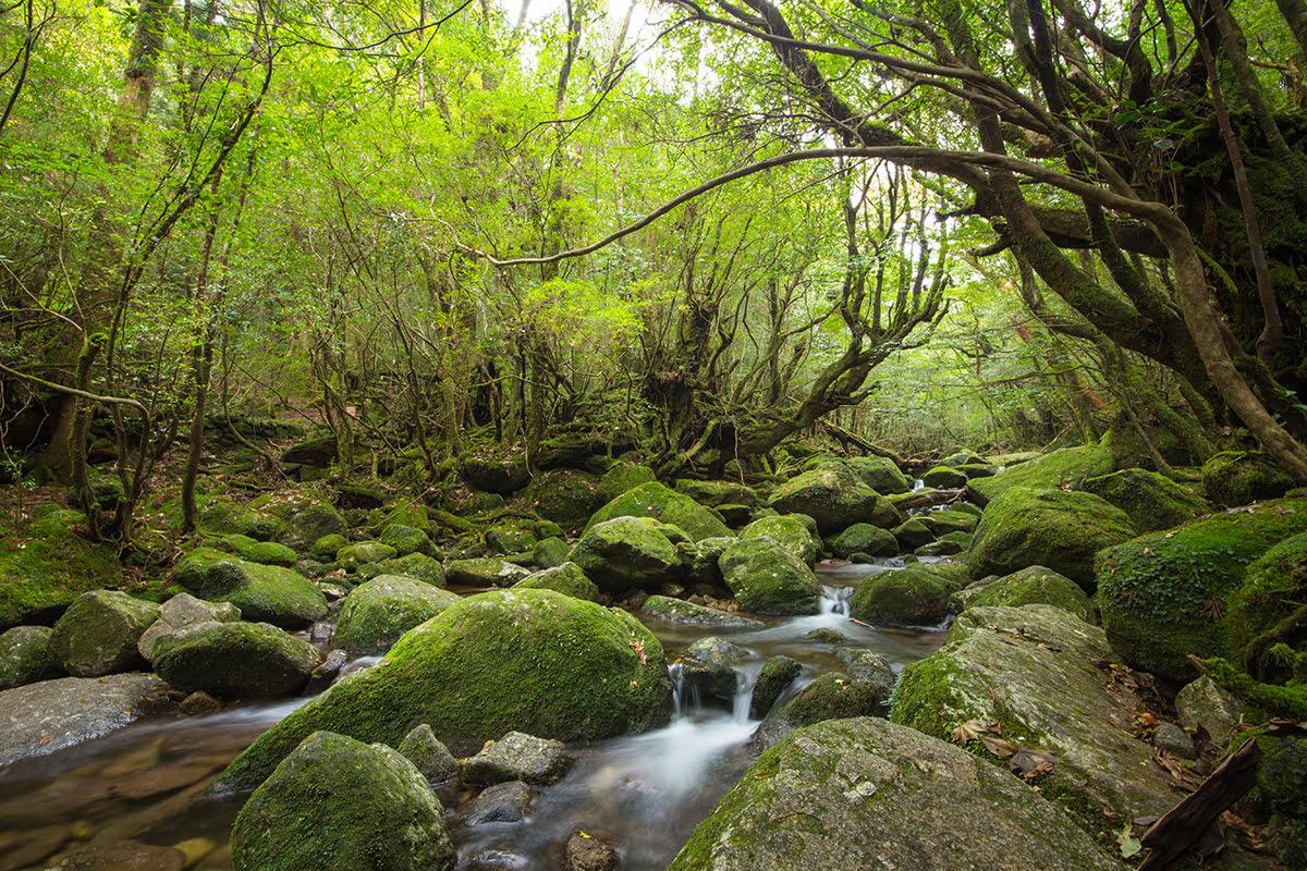 Things to do in Kyushu-Japan-Shiratani Unsuikyo Gorge