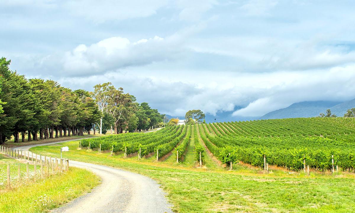 ทัวร์ชิมไวน์-ไร่องุ่น-ไวเนอรี่-Yarra Valley