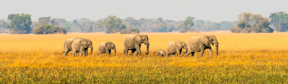 Featured photo-African wildlife-safari-places to visit in Zambia-Africa