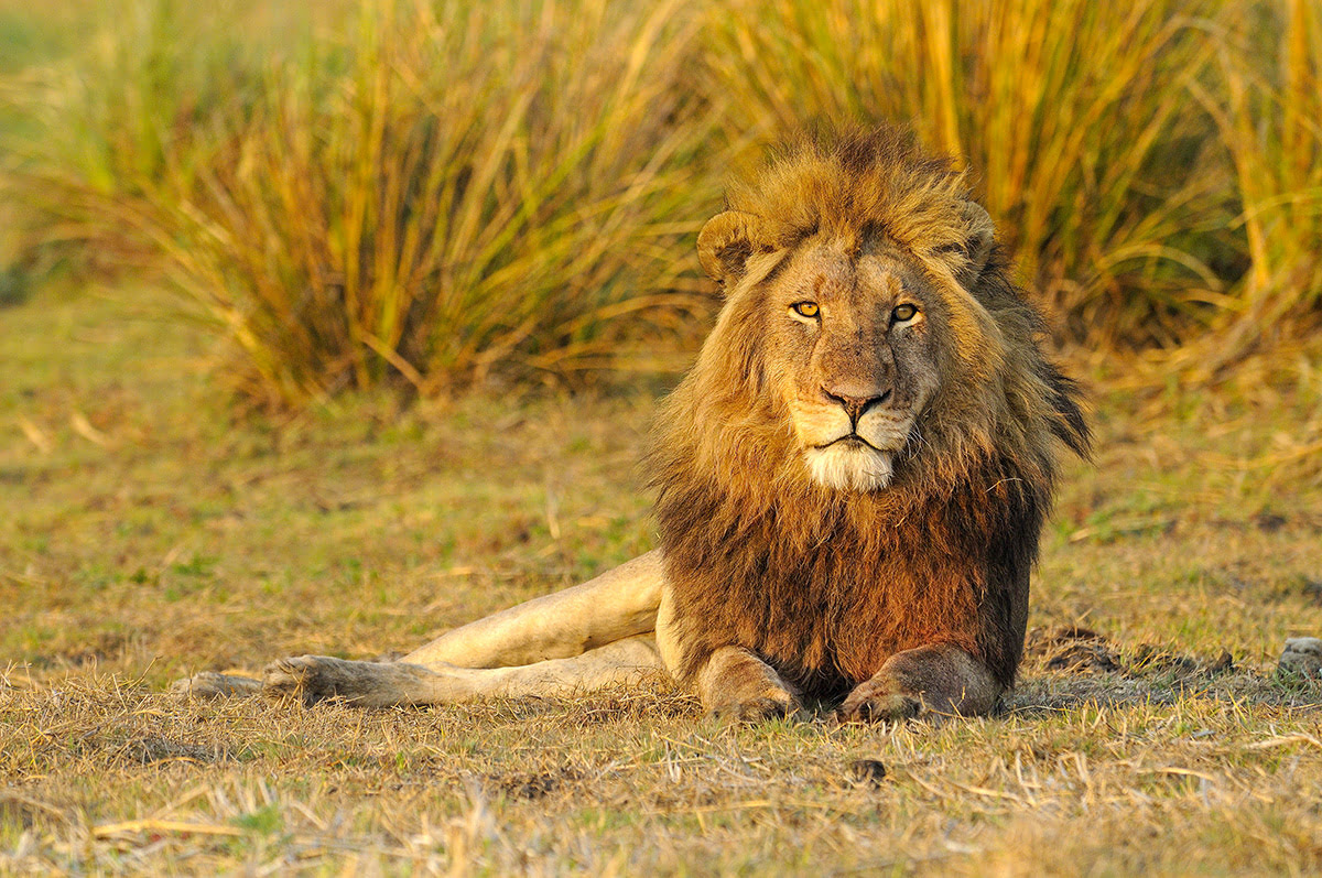Places to visit in Zambia-Africa-Kafue National Park
