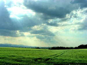God's reality becomes our human reality through our enjoyment and experience of Him as the True One [picture source: Sun shining over the fields]
