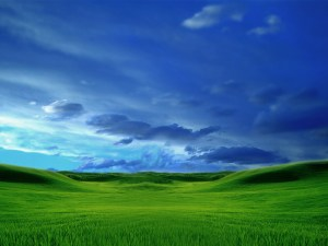 becoming the reproduction of Christ as the meal offering church life today [picture: green grass and blue sky wallpaper]