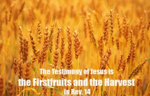 The Church as the Testimony of Jesus is the Firstfruits and the Harvest in Rev. 14