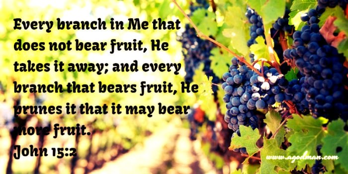 John 15:2 Every branch in Me that does not bear fruit, He takes it away; and every branch that bears fruit, He prunes it that it may bear more fruit.