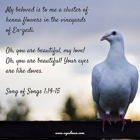 Song of Songs 1:14-15 My beloved is to me a cluster of henna flowers in the vineyards of En-gedi. Oh, you are beautiful, my love! Oh, you are beautiful! Your eyes are like doves.
