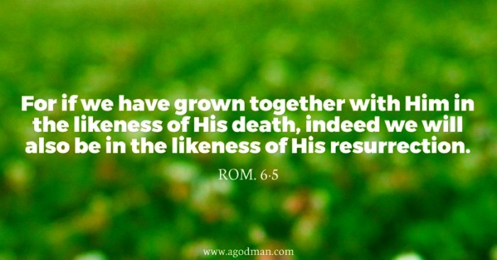 Rom. 6:5 For if we have grown together with Him in the likeness of His death, indeed we will also be in the likeness of His resurrection.